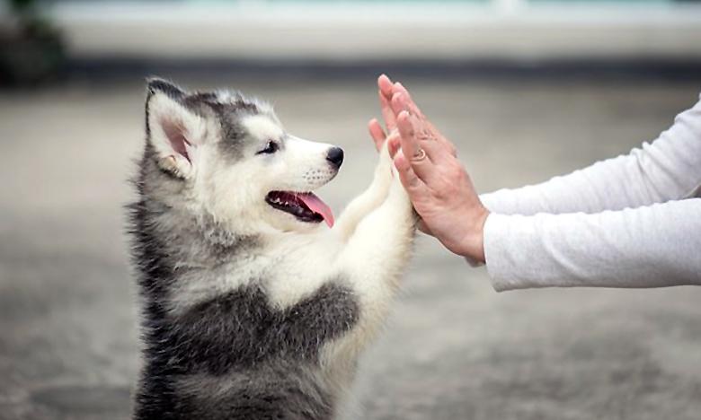 Dog, మీ పప్పీకి జ్వరముంటే మీకూ వస్తుందా?