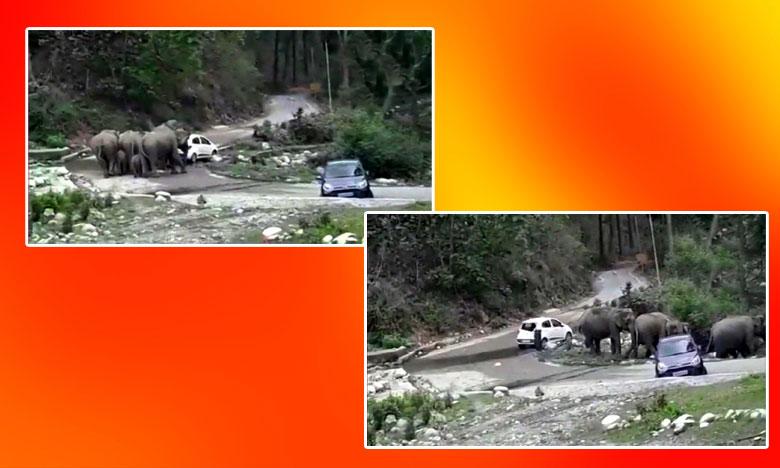 Herd Of Elephants Attacks Cars in Uttarakhand, పర్యాటకులకు చుక్కలు చూపించిన గజరాజులు