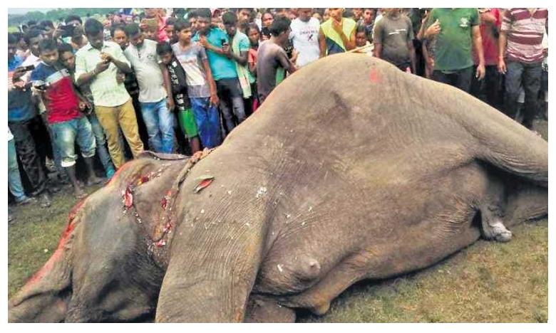Elephants Die, విద్యుత్ తీగలు తగిలి.. మృత్యువాత పడ్డ గజరాజులు