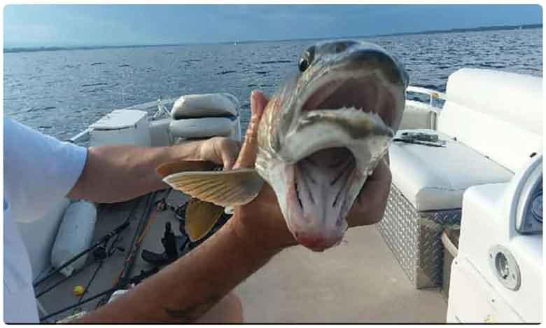 Viral: Fish with two mouths shocks the internet, చేపా.. చేపా.. నీకు రెండు నోళ్లా..వావ్
