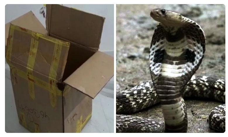 Odisha man opens courier parcel, finds cobra inside. Then, this
