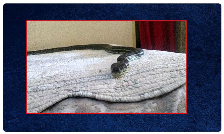 Snake From Ceeling