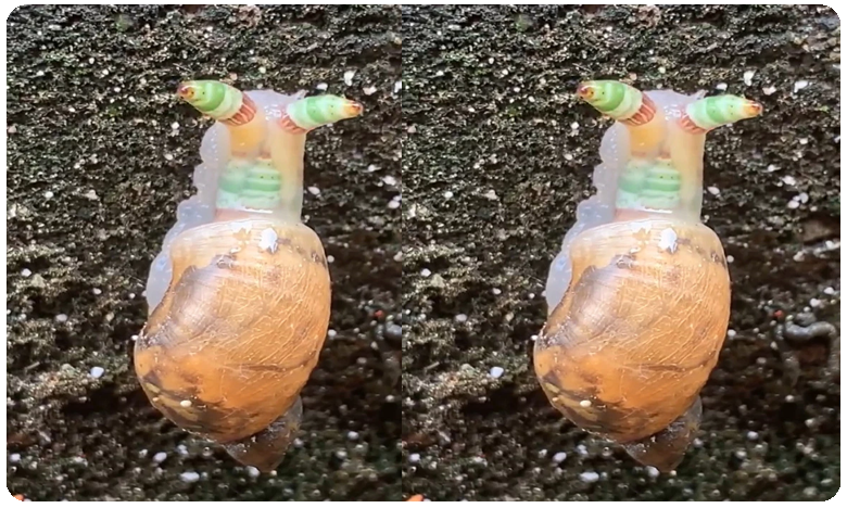 Zombie Snail is freaking People out and Amazing them, Video Goes Viral