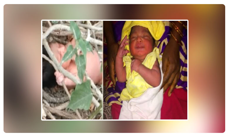 Tamil Nadu: Newborn baby rescued from bushes