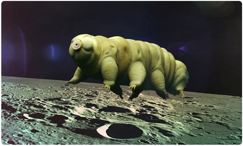 thousands of ultra resilent tartigrades (water bears) were left on the moon