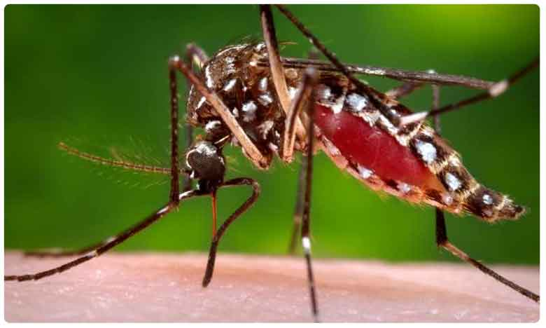 TV9 Fight Against On Dengue Issue