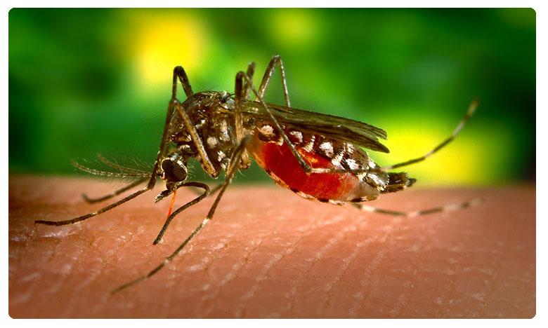 Keep mosquitoes outside., ఇలా చేస్తే దోమలు దరి చేరవు..