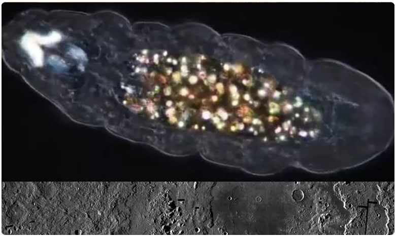 Chandrayaan 2 the secret of the only animal that can survive in space earth and the moon