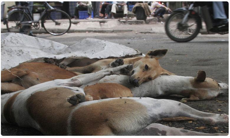 Dog's death in karimnagar turns into a new mistery !, కరీంనగర్ జిల్లాకు కొత్తభయం..మిస్టరీగా కుక్కల మృతి