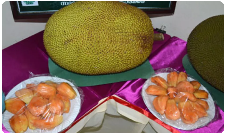 Karnataka: This rare jackfruit tree gets CCTV protection in Tumkur district