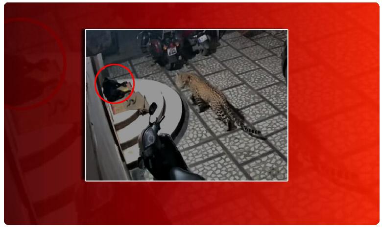 Leopard attacks sleeping dog, మెల్లగా వచ్చి.. ఒక్కసారిగా దూకి..