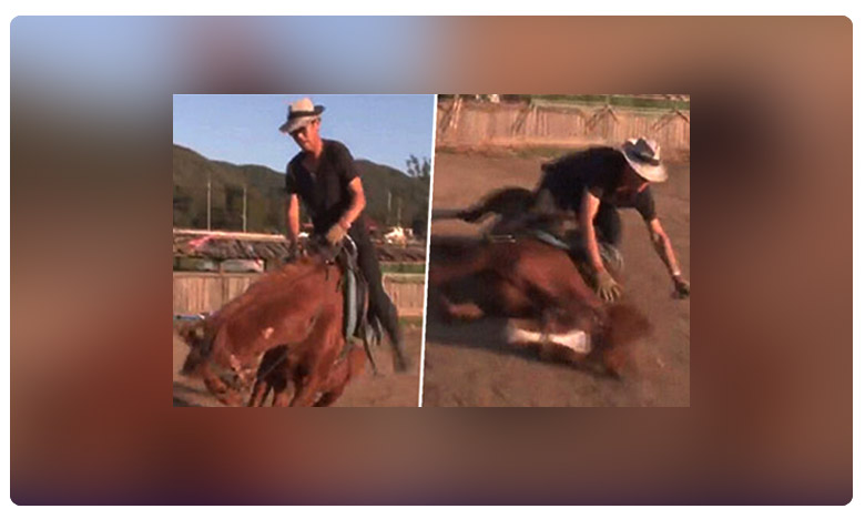 Naughty horse pretends to fall dead when people try to ride it, ఈ గుర్రం తెలివి చూశారా..? యాక్టింగ్కి ఆస్కార్ ఇచ్చినా తక్కువే..!