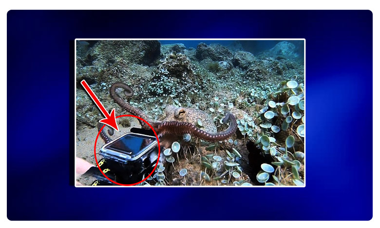 This is the astonishing moment a diver has an underwater tug of war with an octopus when it tries to steal his camera, ' నాకూ కెమెరా కావాలి '.. ' ఆక్టోపస్ మారాం ' !