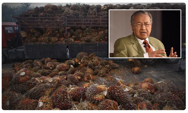 Indian buyers slash Malaysian palm oil purchases, ' కాశ్మీర్ ' తో పామాయిల్ లింక్.. మలేసియాకు ట్రబుల్ !
