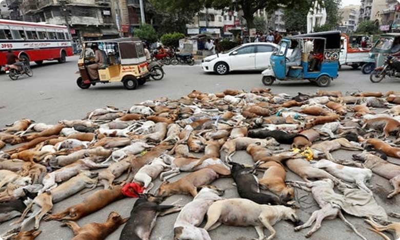 Two hundred stray dogs poisoned in Andhra Pradesh allegedly on Panchayat Secretary's orders, ఏపీలో ఘోరం.. 200 కుక్కలకు విషం పెట్టి…