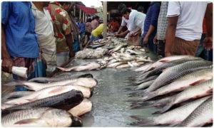 dangerous fish farms in mahabubnagar, పాలమూరు ఫిష్ తింటున్నారా ? అయితే అంతే సంగతి !