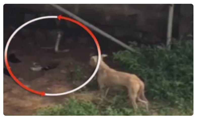 Dog fight ,dangerous snake, Nagole RTA offfice, snakes in Rta offfice