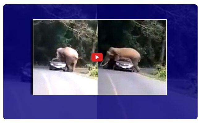 An elephant tried to sit on a car at Khao Yai National Park., ఏనుగమ్మ ఏనుగు.. కారెక్కింది ఏనుగు !