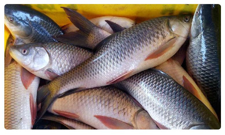 Variety Offer In Tamilnadu, రూపాయికే కిలో చేపలు.. ఎక్కడంటే!
