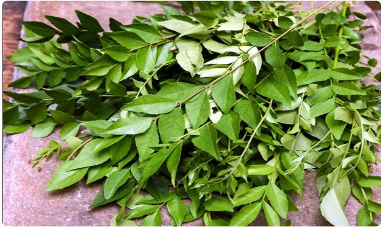 Benefits and side effects of curry leaves, కరివేపాకుతో తస్మాత్ జాగ్రత్త..!