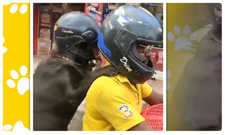 Dog wears helmet, శునకం ఇస్తోన్న మెసేజ్.. పాటిద్దాం గురూ..!