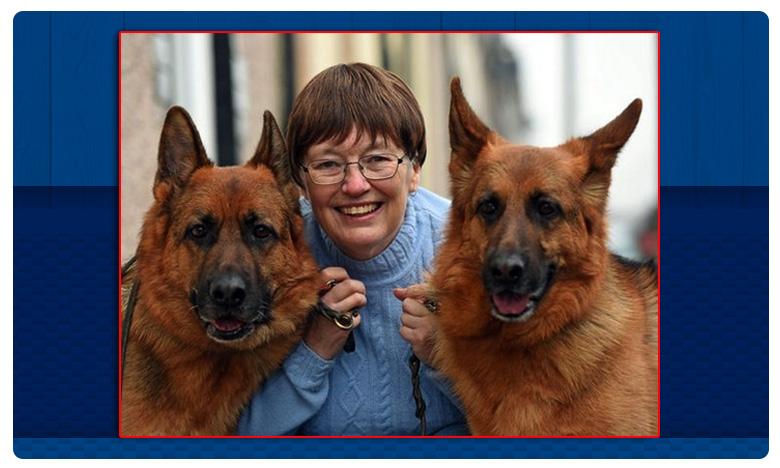 Dogs Identify Breast Cancer, Dogs Identify Breast Cancer: బ్రెస్ట్ క్యాన్సర్ని గుర్తించి ఆమెను రక్షించిన శునకాలు.. వావ్ !