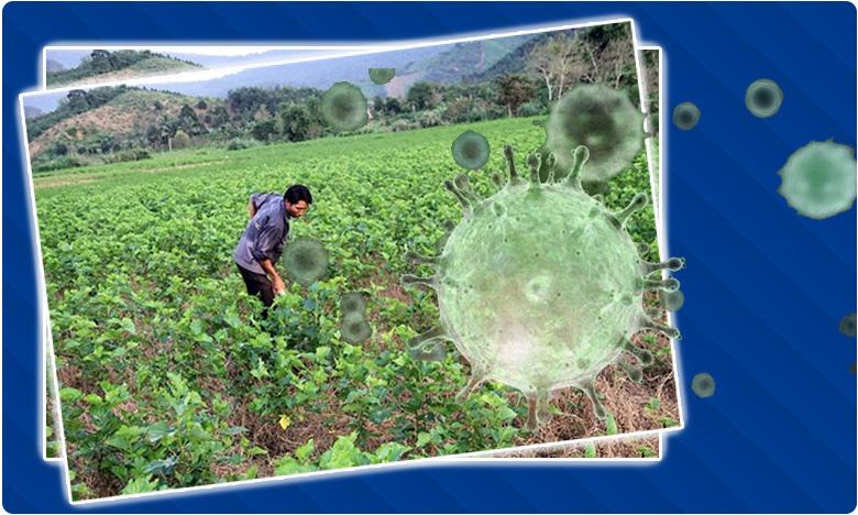 Mulberry farmers benefit out of coronavirus spread, మల్బరీ రైతుల పంట పండిస్తోన్న కరోనా వైరస్…!
