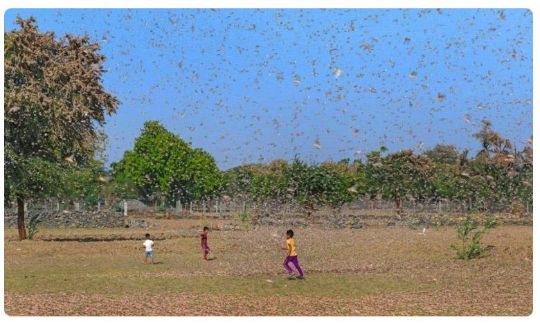 Death toll due to coronavirus in Maharashtra rises, మహారాష్ట్రను వణికిస్తోన్న కరోనా మహమ్మారి..!