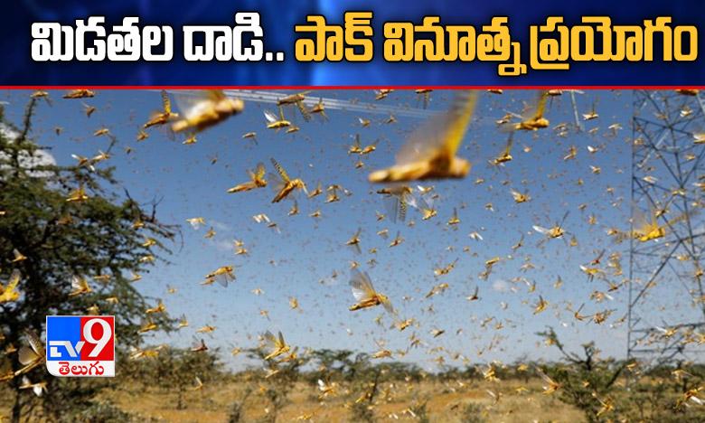 Locusts Attack on farming lands, మిడతల దాడి.. వినూత్న పథకానికి శ్రీకారం చుట్టిన పాక్
