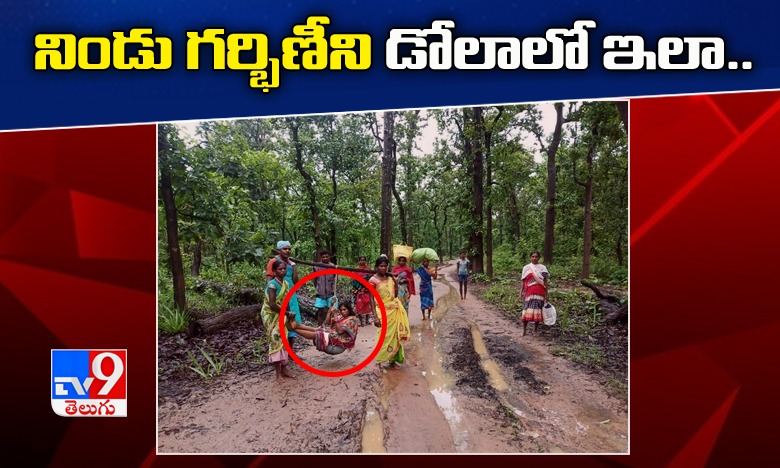 Tiger Chases: Tiger Chases Bus On Jungle Safari In Chhattisgarh, Tiger Chases: టూరిస్టు బస్సును వెంటబడి తరిమిన పులి.. వామ్మో !