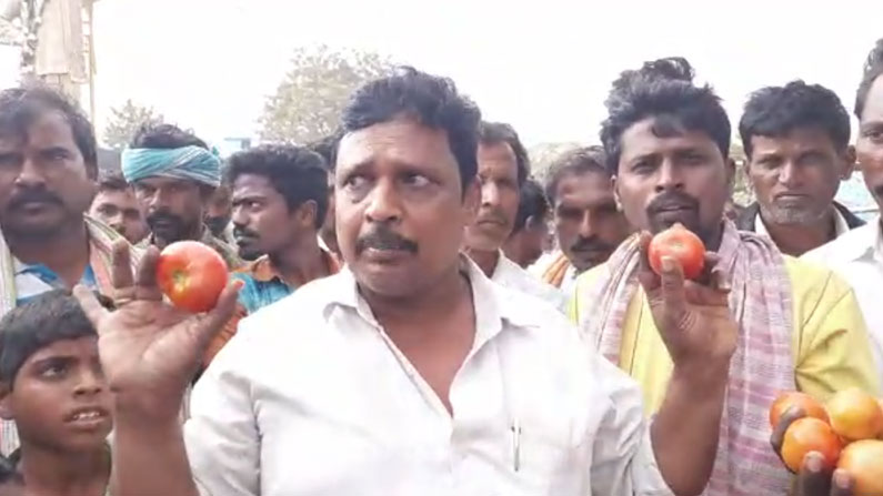 tomato 1 Telugu News, Breaking News in Telugu, తెలుగు వార్తలు, Online Telugu News, Live Telugu News
