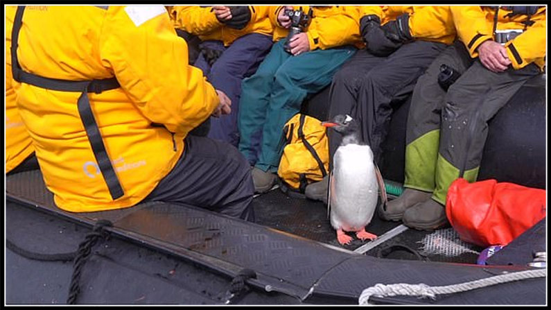 incredible moment penguin escapes killer whale by jumping it self onto a dinghy, antarctica, penguin, killer whale, save, jump, dinghy, tourists